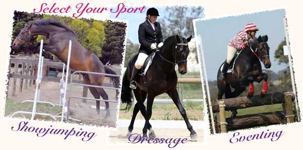 Breeders of quality dressage, showjumping and eventing horses